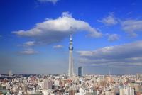 東京スカイツリー 10247018573| 写真素材・ストックフォト・画像・イラスト素材|アマナイメージズ