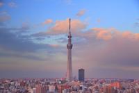 夕日に染まる東京スカイツリー 10247018575| 写真素材・ストックフォト・画像・イラスト素材|アマナイメージズ