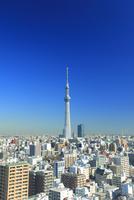 東京スカイツリー 10247018584| 写真素材・ストックフォト・画像・イラスト素材|アマナイメージズ