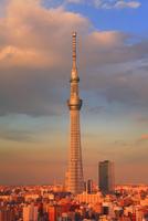 夕日に染まる東京スカイツリー 10247018607| 写真素材・ストックフォト・画像・イラスト素材|アマナイメージズ