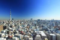 東京スカイツリーと錦糸町方向の街並 10247018626| 写真素材・ストックフォト・画像・イラスト素材|アマナイメージズ
