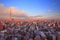 夕日に染まる東京スカイツリーと錦糸町方向の街並 10247018627| 写真素材・ストックフォト・画像・イラスト素材|アマナイメージズ
