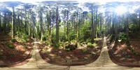 トロッコ道と杉林のVRパノラマ