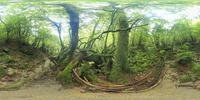 もののけ姫の森のVRパノラマ