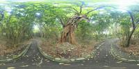 志戸子ガジュマル園のVRパノラマ 10247019804| 写真素材・ストックフォト・画像・イラスト素材|アマナイメージズ