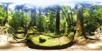屋久杉の森のVRパノラマ