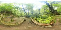 もののけ姫の森観賞場のVRパノラマ