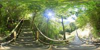 弥生杉遊歩道と新緑の森のVRパノラマ