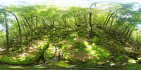 苔むす原生林のVRパノラマ