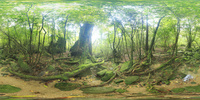 屋久杉など新緑の森のVRパノラマ 10247019813| 写真素材・ストックフォト・画像・イラスト素材|アマナイメージズ