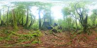 屋久杉など新緑の森のVRパノラマ