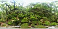 苔むす原生林のVRパノラマ 10247019815| 写真素材・ストックフォト・画像・イラスト素材|アマナイメージズ