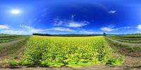 菜の花畑(キガラシ)と十勝連峰と大雪山のVRパノラマ