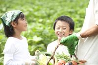 畑の中で収穫した野菜を持つ父と子供男女