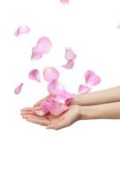 舞落ちるバラの花びらと手 10248007417| 写真素材・ストックフォト・画像・イラスト素材|アマナイメージズ