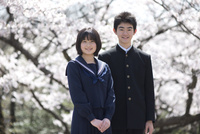 桜と中学生男女