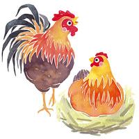 干支イラスト 鶏