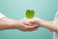 ハートの緑を持つ2人の手 10250000648| 写真素材・ストックフォト・画像・イラスト素材|アマナイメージズ