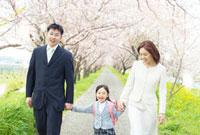 桜並木の下を手をつないで歩く日本人家族