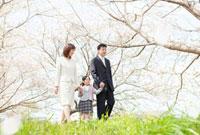 桜の下を手をつないで歩く日本人家族