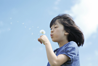 たんぽぽの綿毛を吹く女の子 10250005549| 写真素材・ストックフォト・画像・イラスト素材|アマナイメージズ