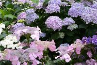 松江 フォーゲルパーク園内のセンターハウスの花