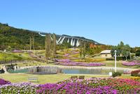 淡路,国営明石海峡公園,コスモスと花の中海 10254011252| 写真素材・ストックフォト・画像・イラスト素材|アマナイメージズ