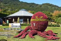 淡路,国営明石海峡公園,タコの花壇 10254011373| 写真素材・ストックフォト・画像・イラスト素材|アマナイメージズ