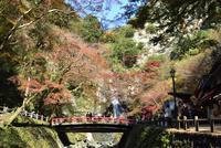 箕面,紅葉,箕面大滝