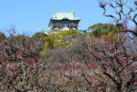 大阪城梅林公園から大阪城天守閣を見る