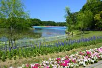 長居植物園,花壇と遊歩道 10254014433  写真素材・ストックフォト・画像・イラスト素材 アマナイメージズ