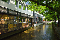 新緑の高瀬川 10254014591| 写真素材・ストックフォト・画像・イラスト素材|アマナイメージズ