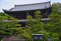新緑の総本山知恩院 10254014608| 写真素材・ストックフォト・画像・イラスト素材|アマナイメージズ