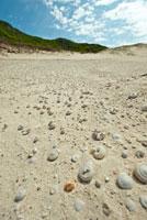 小笠原諸島南島 ヒロベソカタマイマイの化石群