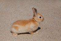 ウサギ 10261000577| 写真素材・ストックフォト・画像・イラスト素材|アマナイメージズ