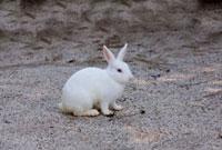 ウサギ 10261000581| 写真素材・ストックフォト・画像・イラスト素材|アマナイメージズ