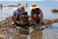 富浦海岸の磯遊び 10261001090| 写真素材・ストックフォト・画像・イラスト素材|アマナイメージズ