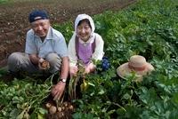 ジャガイモを収穫する農家