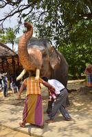 象をくぐると幸せになると言われている