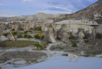ゼルベの谷に並ぶ奇岩群と犬