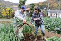 ネギを収穫する農家夫婦 10261021633  写真素材・ストックフォト・画像・イラスト素材 アマナイメージズ