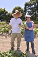 江戸東京野菜の本田ウリの収穫