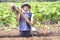 江戸東京野菜の滝野川ゴボウの収穫