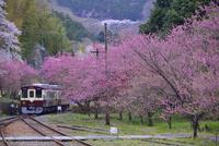 花桃や桜の咲くわたらせ渓谷鉄道