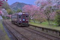 花桃や桜の咲くわたらせ渓谷鉄道の神戸駅付近