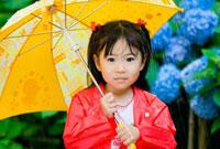 紫陽花畑で傘を持つ子供