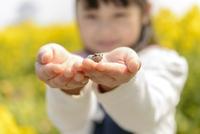 蛙を手のひらに乗せる子供