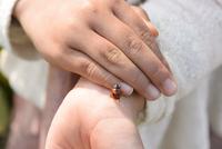 てんとう虫と子どもの手
