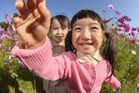 コスモス咲く公園で遊ぶ女の子