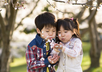 サクラの樹の下で遊ぶ子供達 10264008188| 写真素材・ストックフォト・画像・イラスト素材|アマナイメージズ